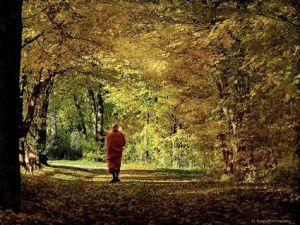 walkingmeditationsm