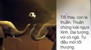 Pham Voi (1)b
