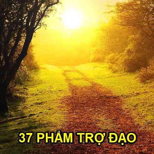 37_pham_tro_dao_4a