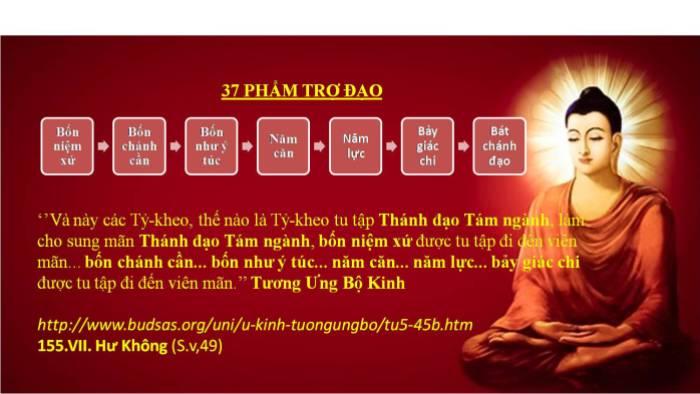 37 Pham Tro Dao_1