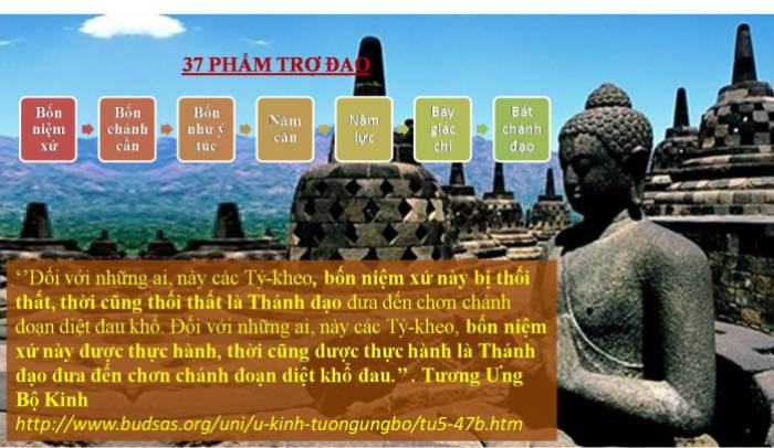 37 Pham Tro Dao_2