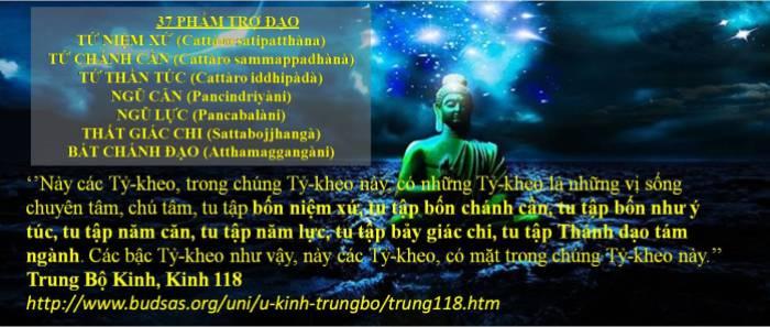 37 Pham Tro Dao_3