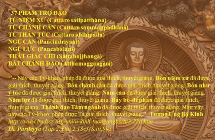 37 Pham Tro Dao_4