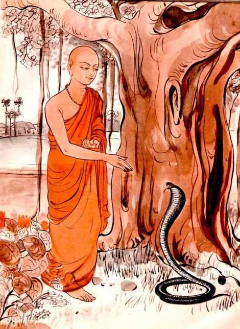 snake-and-bhikkhu1